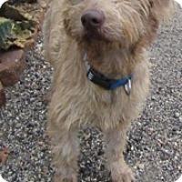 Adopt A Pet :: Bugsy - Von Ormy, TX