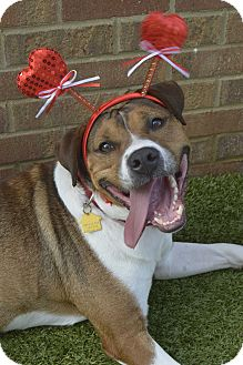Hound (Unknown Type) Mix Dog for adoption in Germantown, Tennessee - Malone