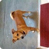 Adopt A Pet :: Lucas - Alliance, NE