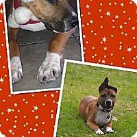 Adopt A Pet :: Junior - Scottsdale, AZ