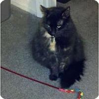 Adopt A Pet :: Opal - Davis, CA