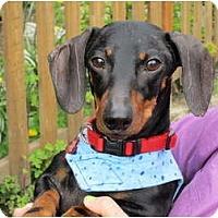 Adopt A Pet :: SO-LOW - Portland, OR