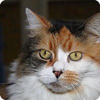 Adopt A Pet :: Pandora - North Branford, CT