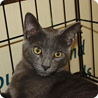 Adopt A Pet :: Raphael - Little Falls, NJ