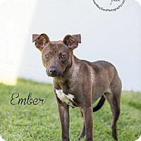 Adopt A Pet :: Ember - Long Beach, CA