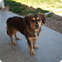 Adopt A Pet :: Bailey - California City, CA