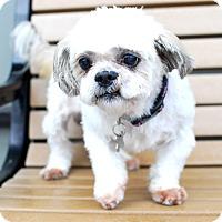Adopt A Pet :: Travis-Adopted! - Detroit, MI