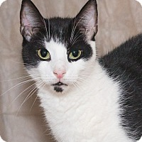 Adopt A Pet :: Spanky - Elmwood Park, NJ
