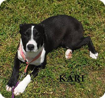 Terrier (Unknown Type, Small)/Boxer Mix Dog for adoption in Batesville, Arkansas - Kari