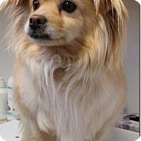 Adopt A Pet :: SHERRY - San Rafael, CA
