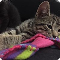 Adopt A Pet :: Sierra - Millersville, MD