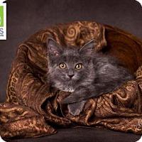 Adopt A Pet :: Sylvia - Salt Lake City, UT