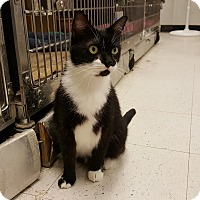 Adopt A Pet :: Sylvester - Chesapeake, VA