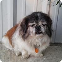 Adopt A Pet :: Weston - Union City, TN
