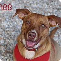 Adopt A Pet :: Renee - Middlebury, CT