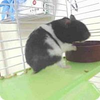 Adopt A Pet :: A061503 - Palmer, AK