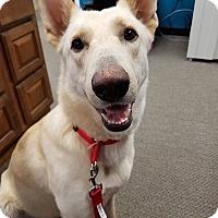 Adopt A Pet :: Cotton pending adoption - Manchester, CT
