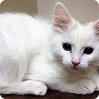 Adopt A Pet :: moved to Downers Grove Duchess - Shorewood, IL