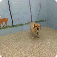Adopt A Pet :: URGENT ON 12/20 San Bernardino - San Bernardino, CA