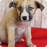 Adopt A Pet :: Zeta - Waldorf, MD
