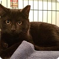 Adopt A Pet :: Finch - Colmar, PA