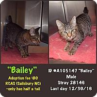 Adopt A Pet :: Bailey - Salisbury, NC