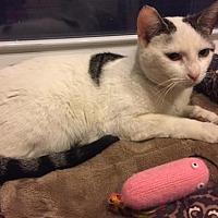 Adopt A Pet :: Maybelle - Philadelphia, PA