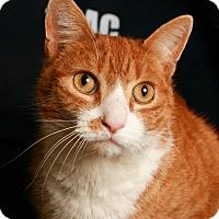 Adopt A Pet :: Garfield - Toms River, NJ