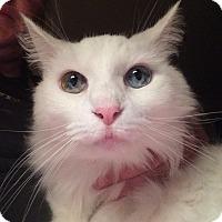 Adopt A Pet :: Lexi - Newnan, GA
