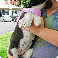 Adopt A Pet :: Mika gives kisses - Sacramento, CA