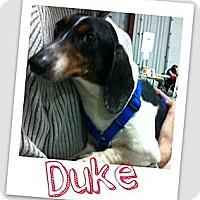 Adopt A Pet :: Duke - Brazil, IN