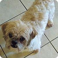 Adopt A Pet :: Stephen - Jacksonville, FL