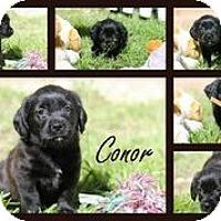 Adopt A Pet :: Conor - Austin, TX
