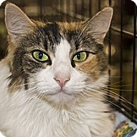 Adopt A Pet :: Fancy - New Port Richey, FL