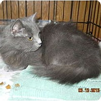 Adopt A Pet :: Vega - Arlington, VA