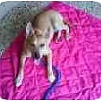 Adopt A Pet :: Jade - Kingwood, TX