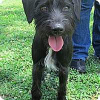 Adopt A Pet :: Jaxson - Kingwood, TX