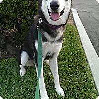 Adopt A Pet :: TIKKANI - Encino, CA