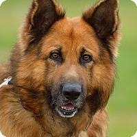 Adopt A Pet :: Thunder - Dacula, GA