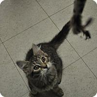 Adopt A Pet :: Mumford - Rockaway, NJ