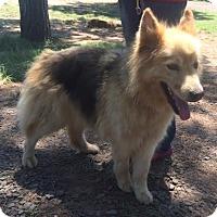 Adopt A Pet :: Rain Adoption pending - East Hartford, CT