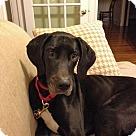 Adopt A Pet :: Stassi