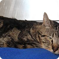 Adopt A Pet :: Condo 11 - Corona, CA