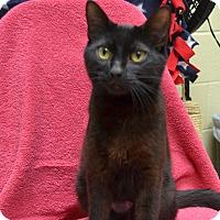 Adopt A Pet :: Petunia - Wheaton, IL