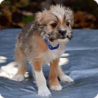 Adopt A Pet :: Marvin K Mooney - Sacramento, CA
