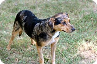 Beagle Mix Dog for adoption in Salem, New Hampshire - MARTINA