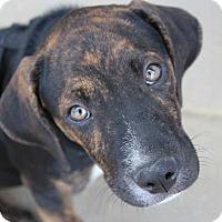 Adopt A Pet :: Spencer - Harrisonburg, VA