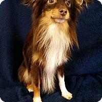 Adopt A Pet :: Loki Montgomery - Urbana, OH