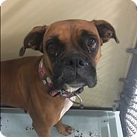 Adopt A Pet :: Ananda - Austin, TX