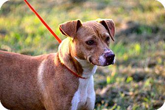 Pit Bull Terrier Mix Dog for adoption in McKenzie, Tennessee - Jasmine